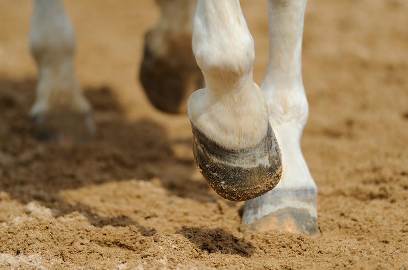 equestrian-sand-uk